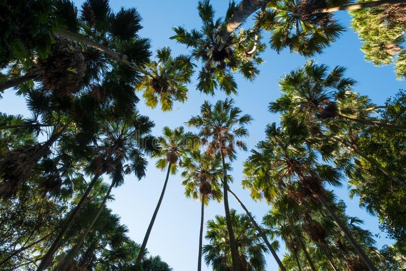 原始森林,禁令粪区,乌隆府泰国,绿色树梢选择聚焦  图库摄影