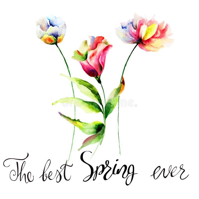 原始的夏天开花与标题最佳的春天 向量例证
