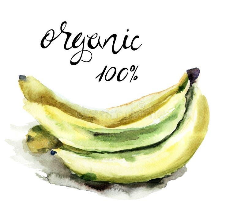 原始的水彩例证用香蕉 库存例证