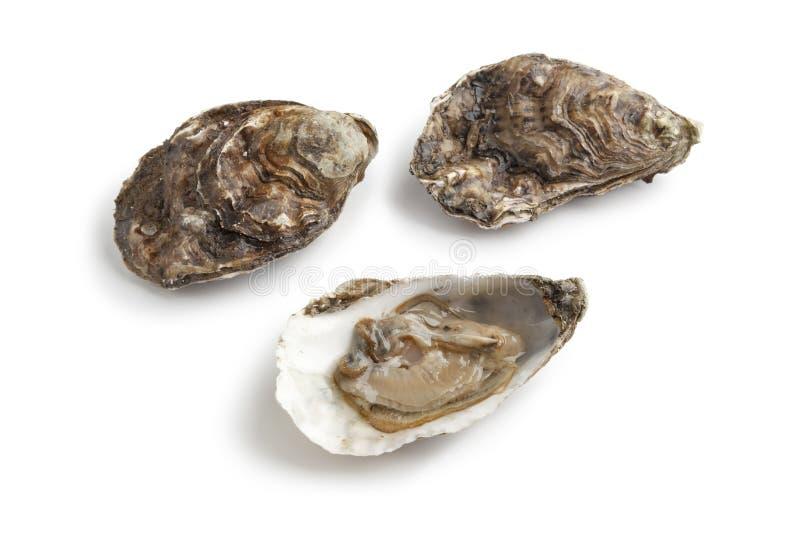 原始闭合的新鲜的开放的牡蛎 免版税库存照片