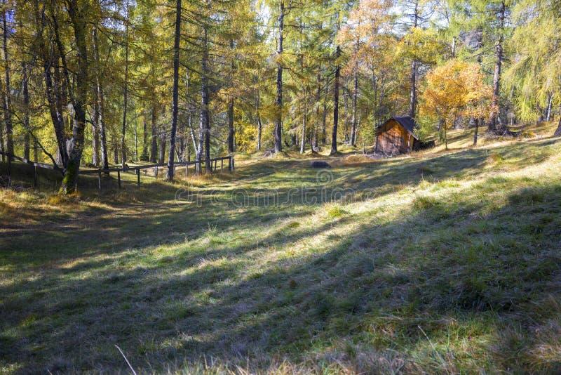 原木小屋在秋天森林地在阿尔卑斯 库存照片