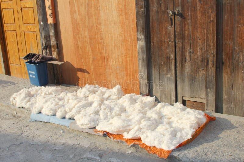 原棉烘干在阳光下 库存照片