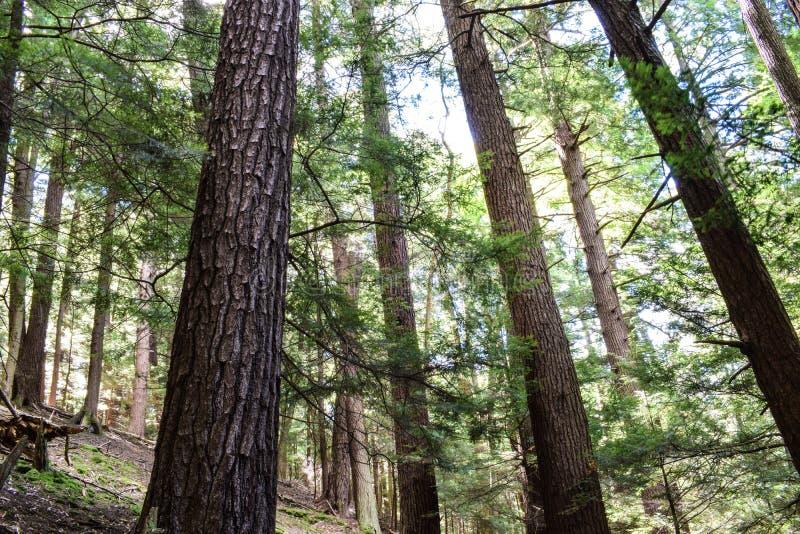 厨师森林国家公园宾夕法尼亚 库存图片