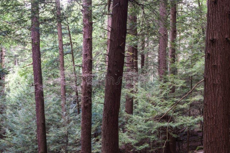 厨师森林国家公园宾夕法尼亚 免版税库存照片