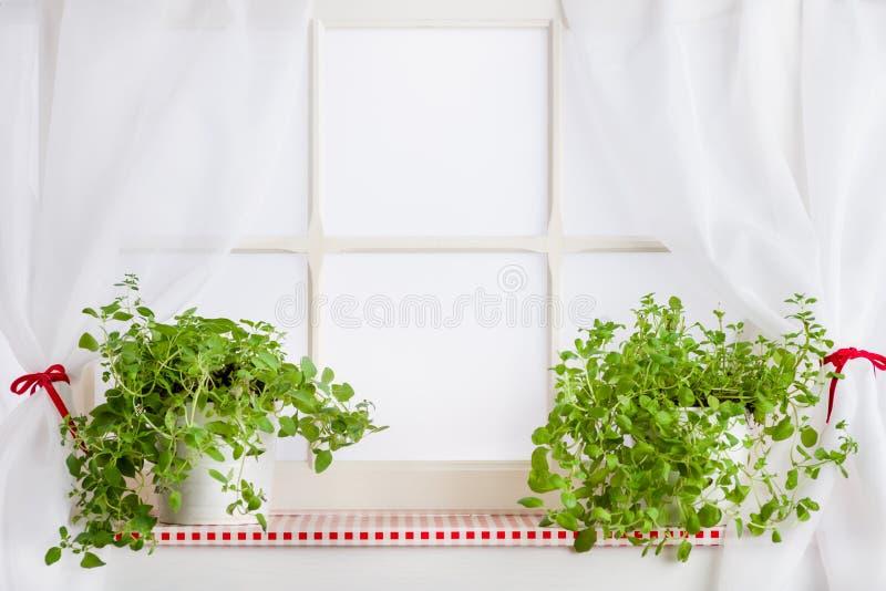 厨房窗口和草本在窗台 库存图片