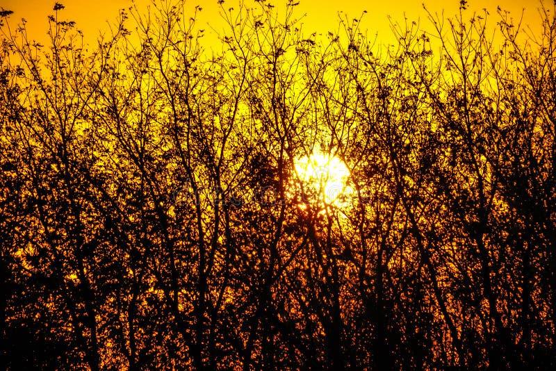 去下来沿路旁的太阳 免版税库存照片