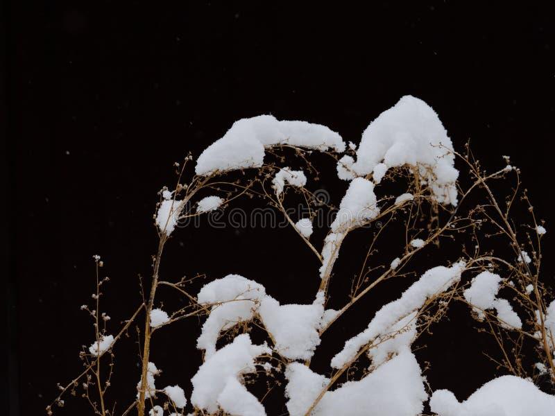 去年` s草弯曲在雪下 免版税库存图片