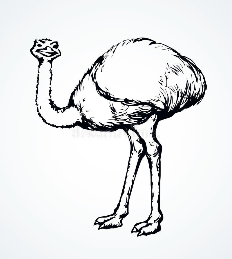 去的驼鸟 r 向量例证