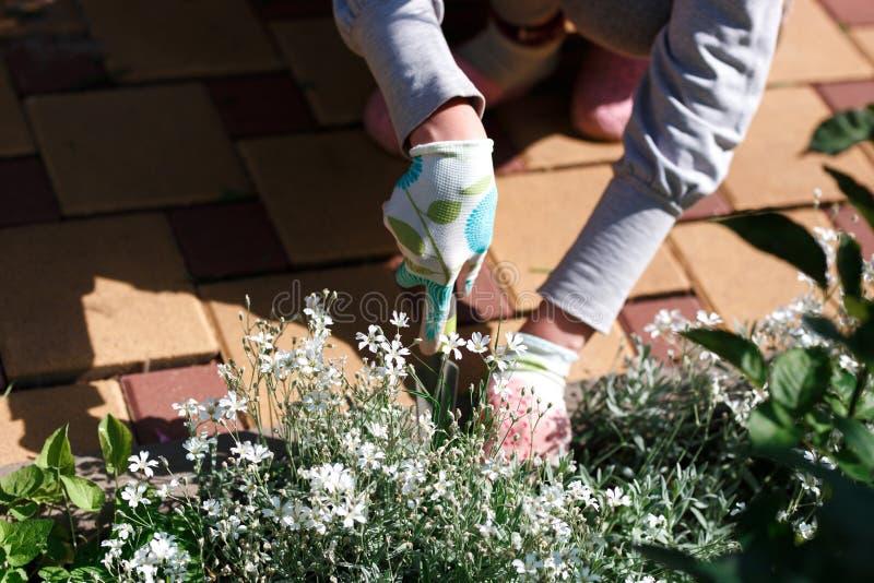 去除杂草的花匠照片从土壤 免版税库存照片