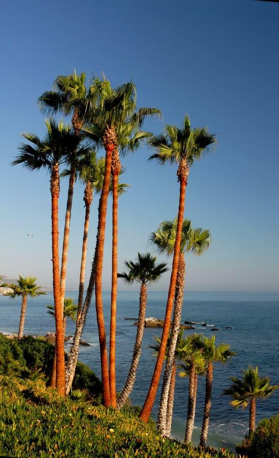 县橙色棕榈树 库存照片
