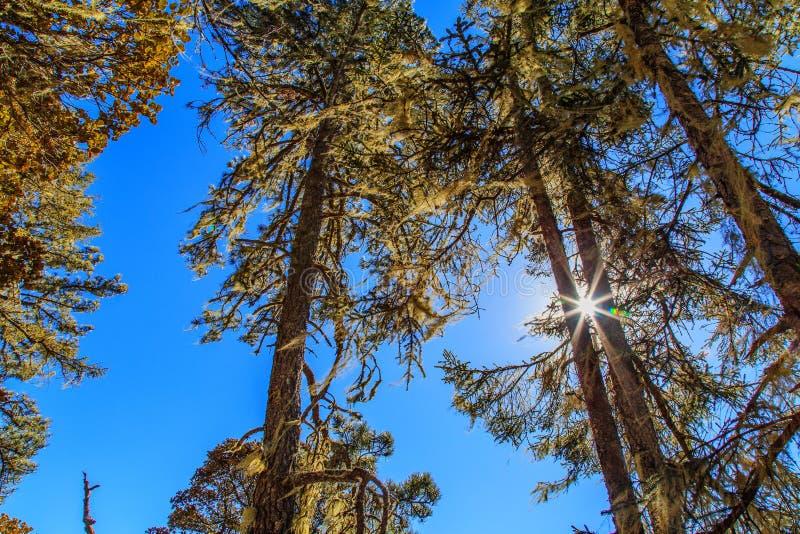 参天的结构树 图库摄影