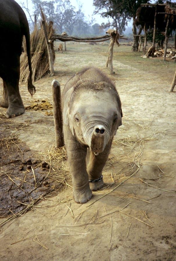 友好的大象一点 免版税库存照片
