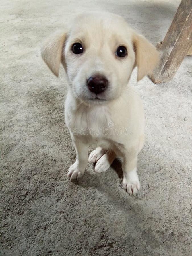 友好的小狗 图库摄影