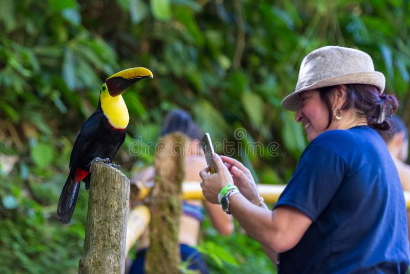 友好的Toucan在哥斯达黎加 免版税库存照片