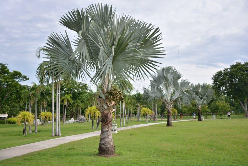双标志棕榈 图库摄影