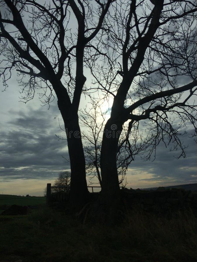 双树 免版税库存图片
