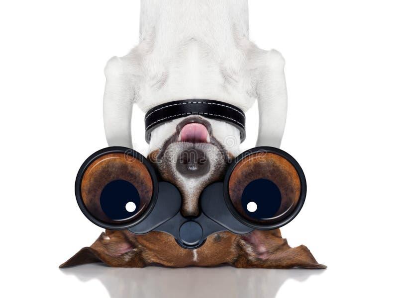 双筒望远镜狗 库存图片