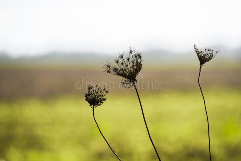 反对一个绿色草甸的干秋天花 库存照片