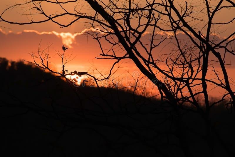反对与美丽的橙色天空的剪影树 日落在背景中 抽象橙色天空 在日落b的剧烈的金黄天空 库存照片