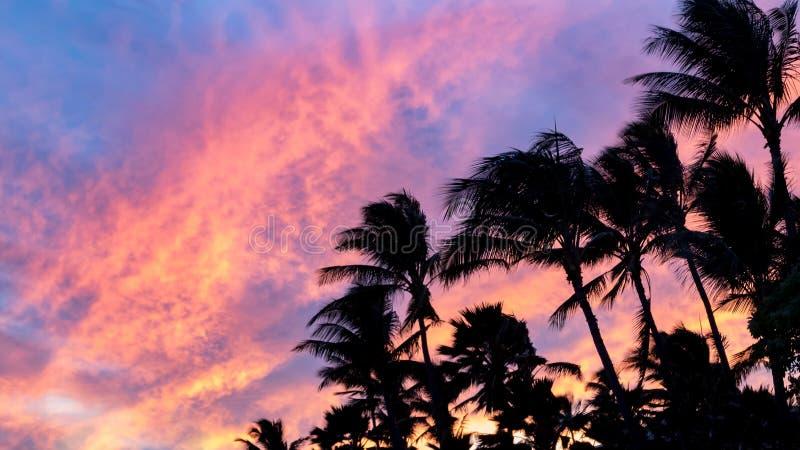 反对五颜六色的桃红色和蓝天backgro的棕榈树剪影 免版税图库摄影