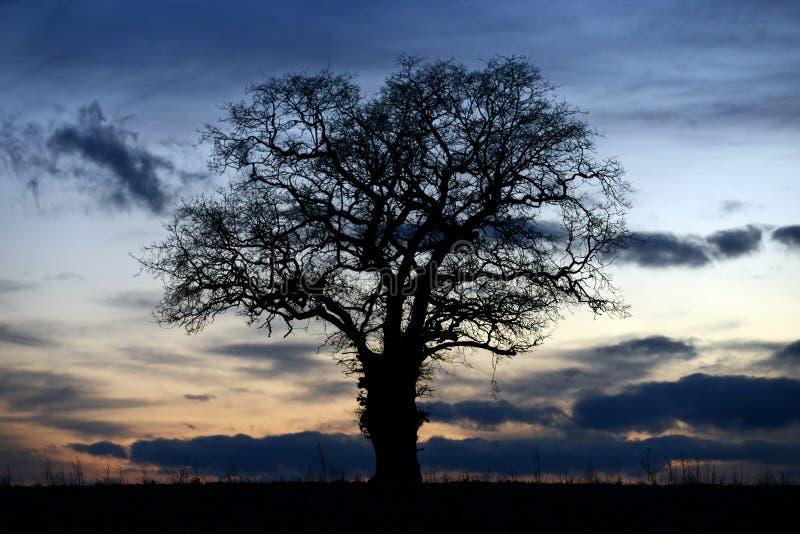 反对剧烈的天空的现出轮廓的橡树 库存图片