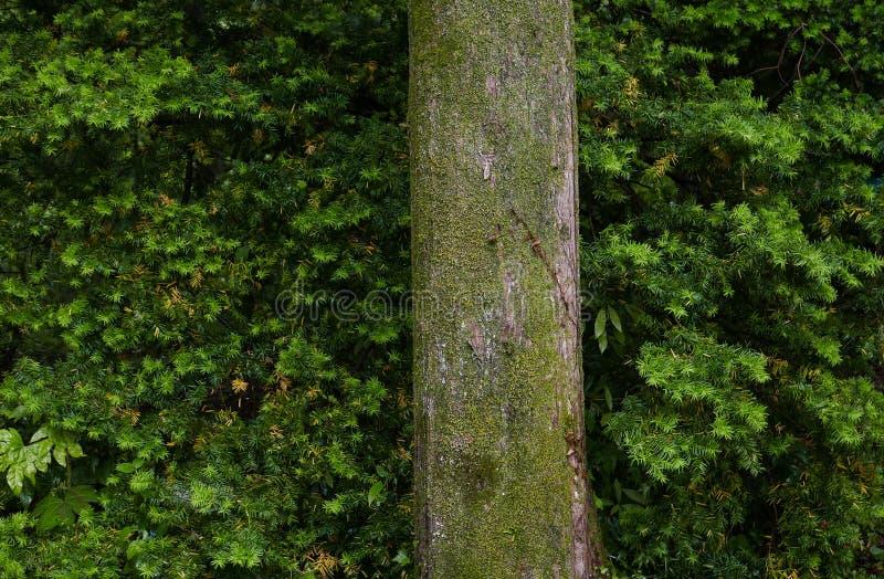 反对叶子背景的树 库存照片