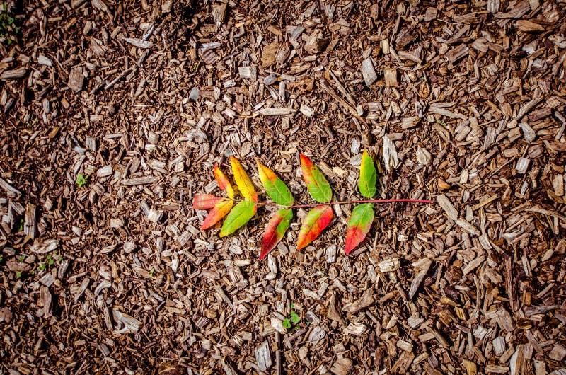 反对土和木片背景的一片唯一秋天叶子 免版税库存图片