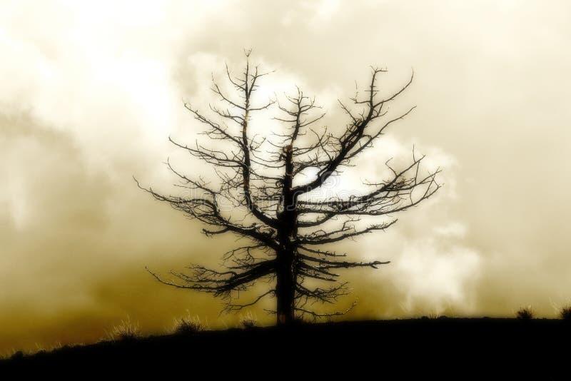反对多云天空的孤立死的树,葡萄酒 免版税库存图片