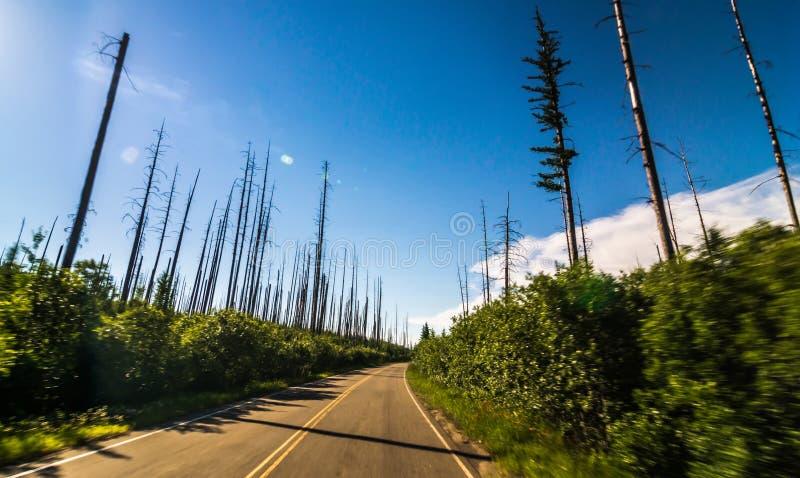 反对多云天空,西部冰川,去对这太阳路,冰川国家公园,冰川县,蒙大拿,美国的被烧的树 库存照片