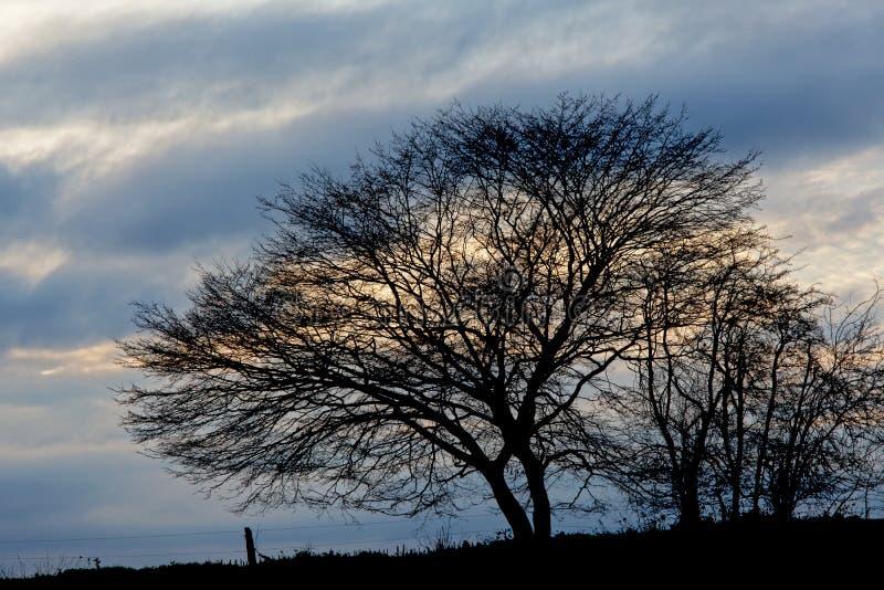 反对多云晚上天空的光秃的树剪影 免版税库存图片