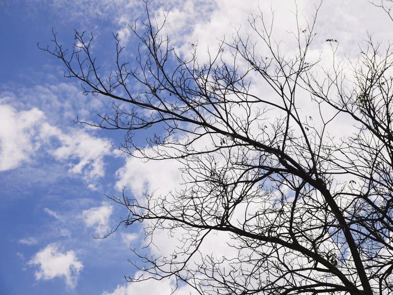 反对多云蓝天的冬天树枝leaftless树 免版税库存图片