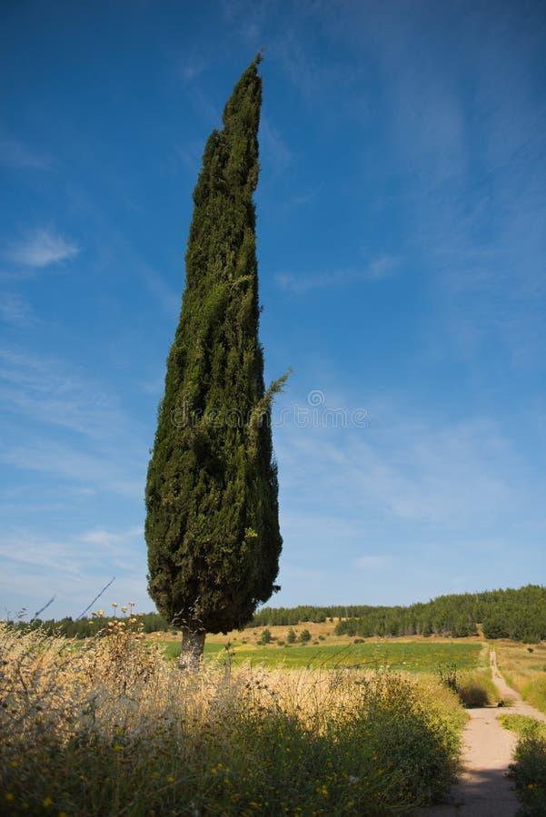 反对多云,夏天,在老路旁边的蓝天的柏树 库存图片