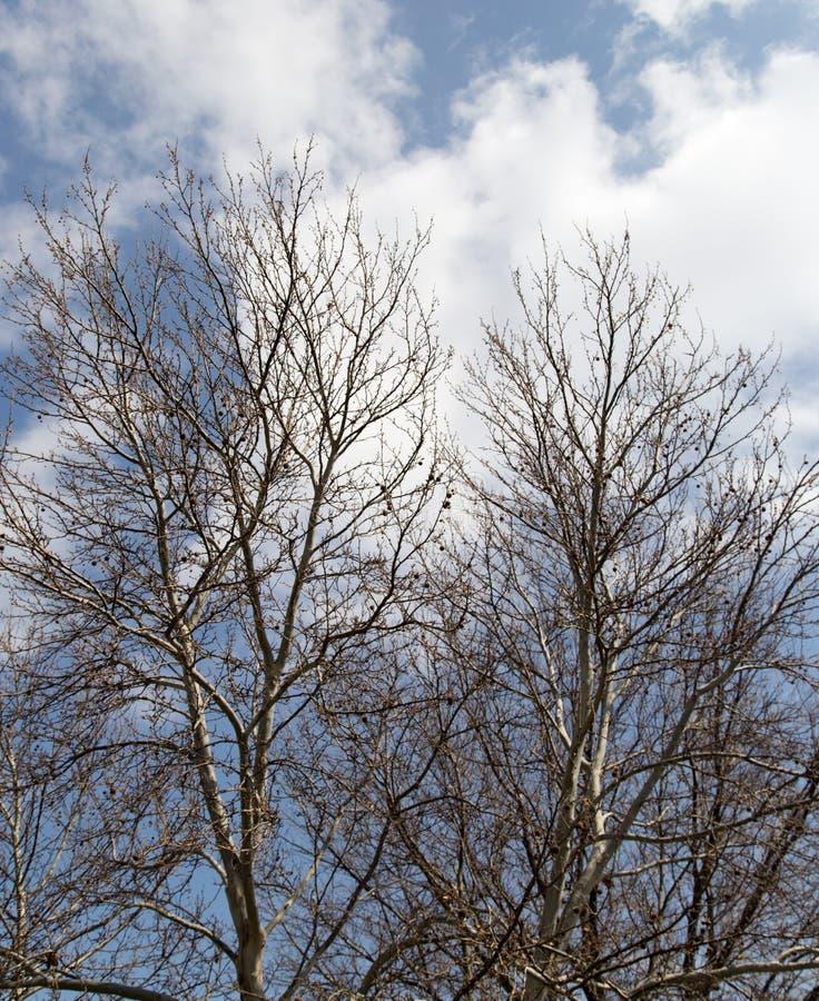 反对天空的不生叶的树枝 库存照片