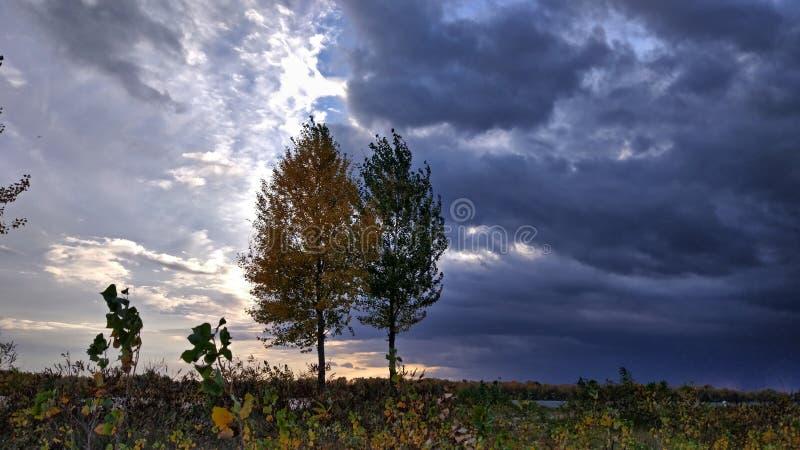 反对天空的两棵树 免版税库存照片
