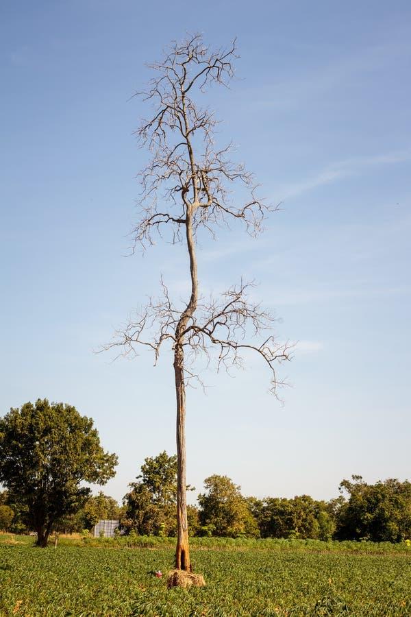 反对天空的干燥树枝 库存照片