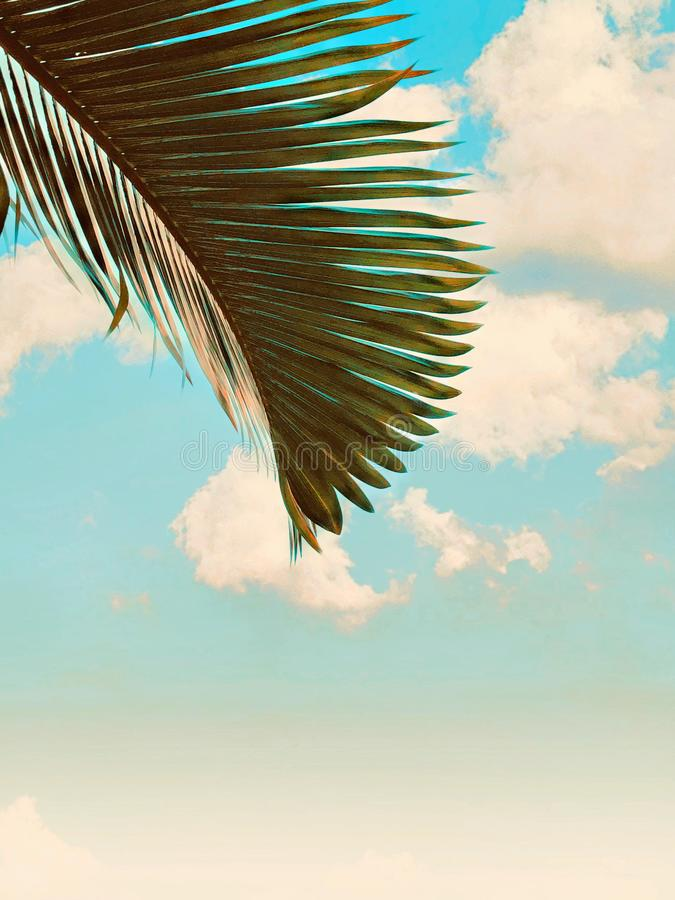 反对天空的干燥棕榈树 库存图片