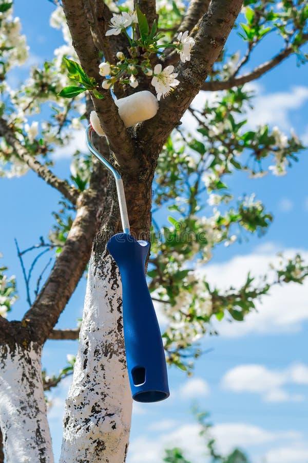 Download 反对天空的樱桃 库存照片. 图片 包括有 春天, 的treadled, 增长, 背包徒步旅行者, 本质, 油漆 - 72357208