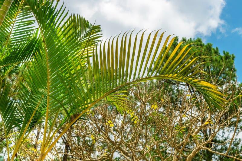 反对天空的色的棕榈叶与云彩在越南 库存照片