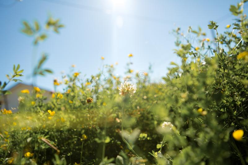 反对天空的草地早熟禾 库存照片