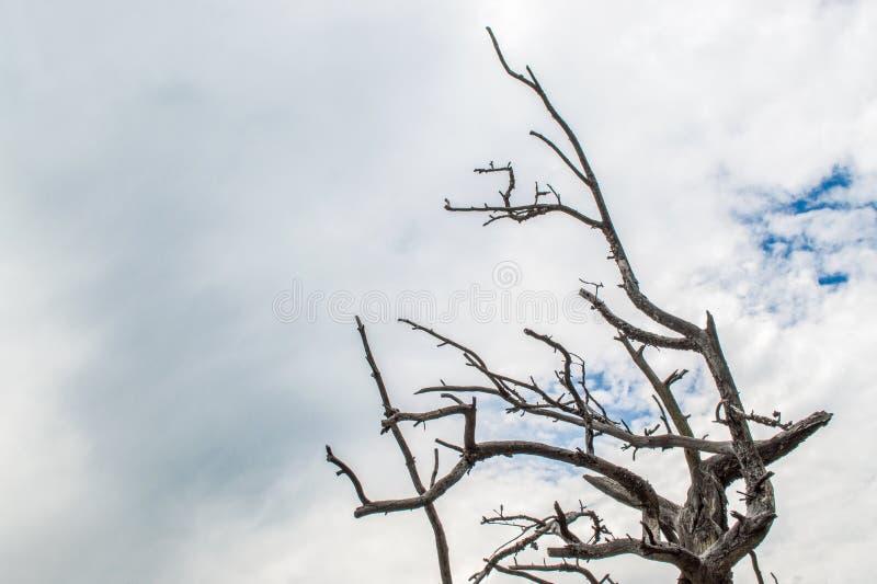 反对天空的贫瘠树枝在有拷贝空间的蒙大拿 库存图片
