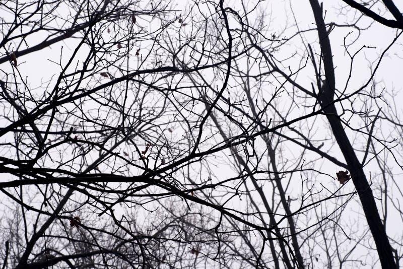 反对天空的贫瘠树枝在有雾的早晨 库存照片