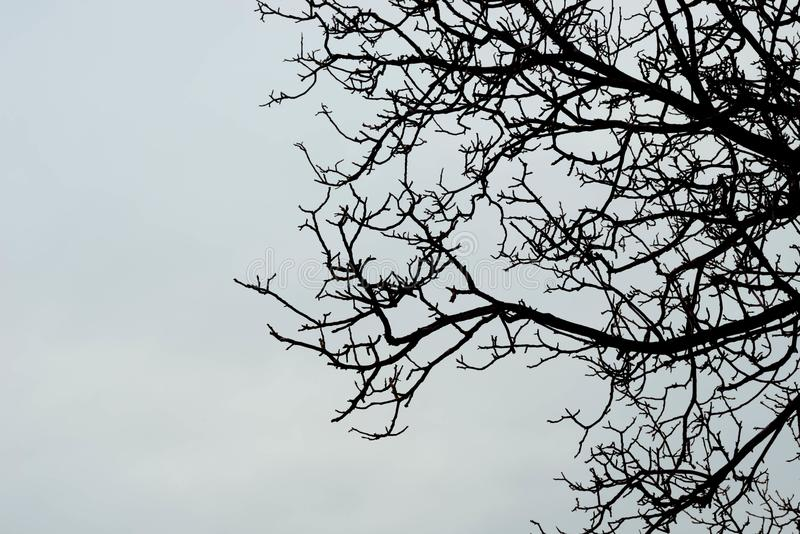反对天空的贫瘠树枝 免版税库存图片
