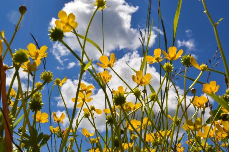 反对天空的黄色花 免版税图库摄影