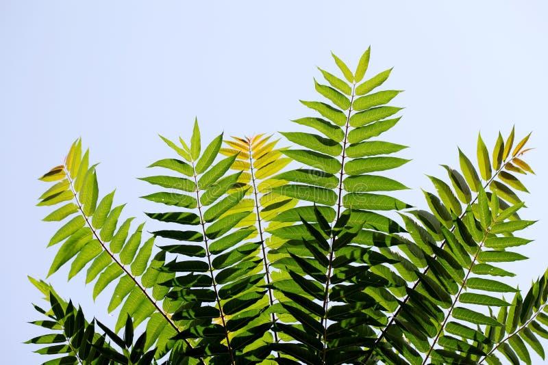 反对天空的绿色叶子 库存图片