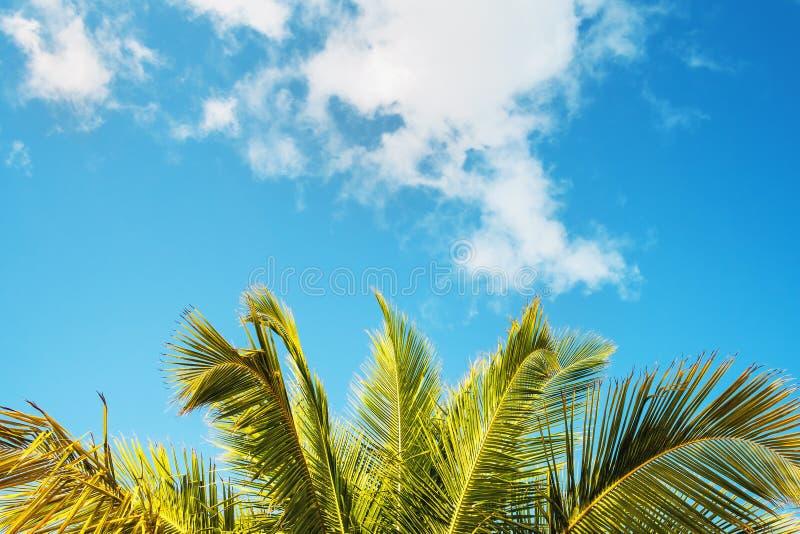 反对天空背景的棕榈叶  免版税库存照片