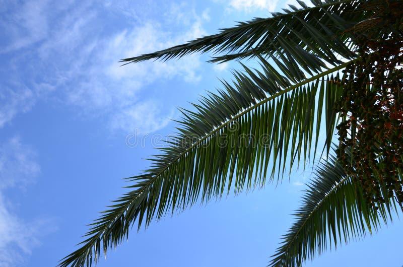 反对天空蔚蓝的热带棕榈 免版税库存图片