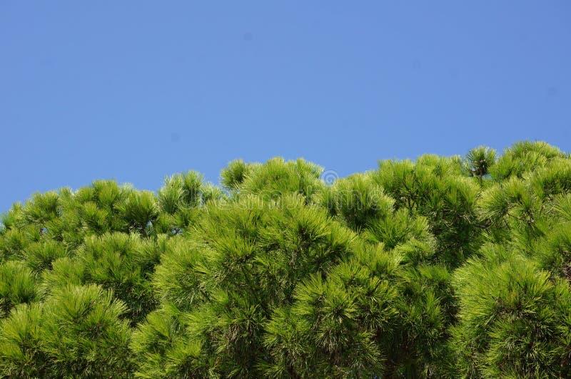 反对天空蔚蓝的绿色树枝 免版税库存照片