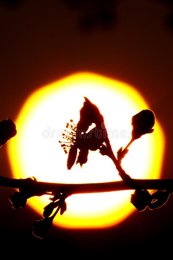 反对太阳的花剪影 免版税库存图片