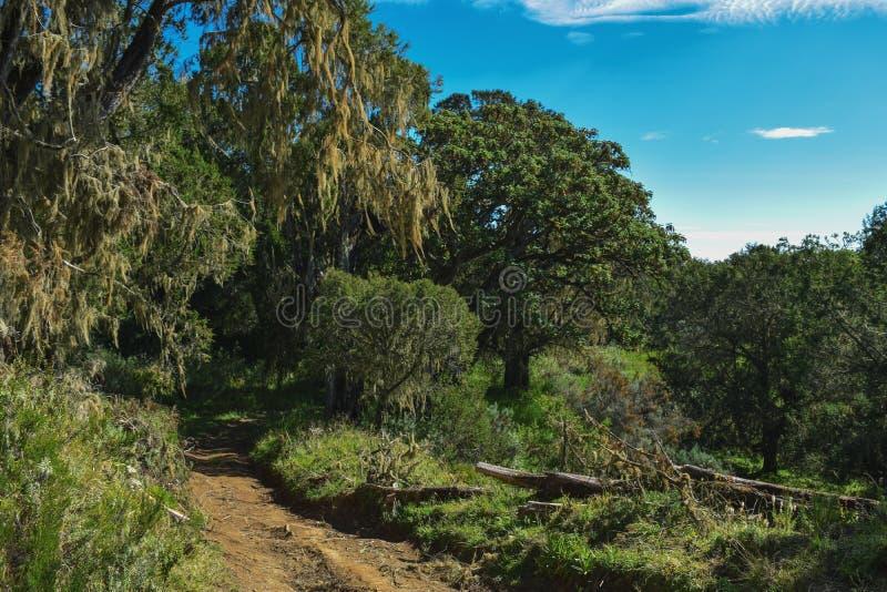 反对密集的雨林的湖在肯尼亚山 免版税库存图片