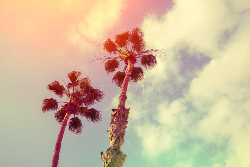 反对日落天空的两棵棕榈树 库存图片